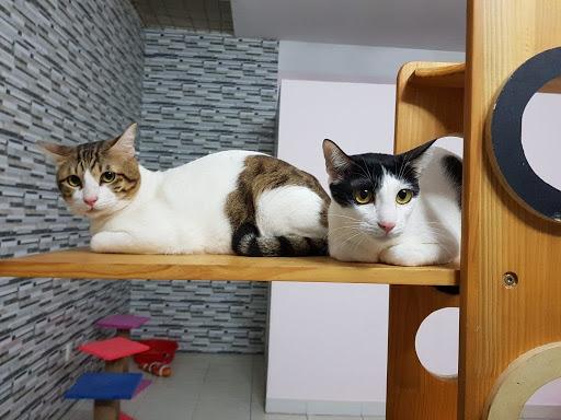 Trung tâm Gaia chăm sóc chó mèo cũng rất tốt